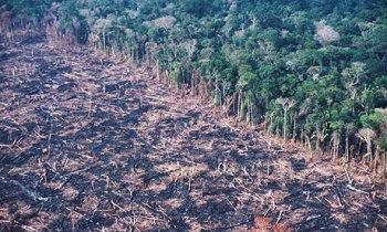 Keyifli ve canlı hayatlar yaşayabilme kapasitemiz ile yağmur ormanlarının yok edilmesi arasında güçlü bir bağlantı olduğunu ne yazık ki artık fark edebilir durumda değiliz.